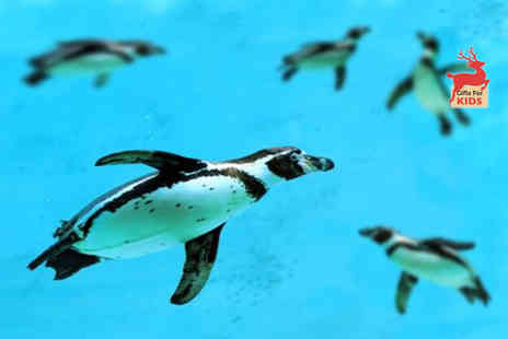 St Andrews Aquarium - Family day pass to St Andrews Aquarium - Save 59%