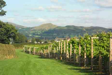Kerry Vale Vineyard - Vineyard Tour and Wine Tasting with a Glass of Mulled Wine and a Mince Pie for Up to Four - Save 0%