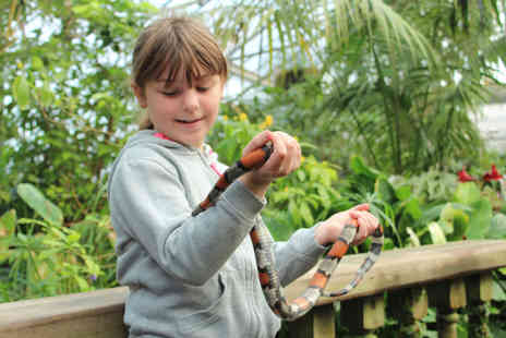 Tropical Butterfly House - Animal experience for one - Save 50%