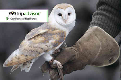 Hawks of Steele - One hour owl experience or Two Hour falconry experience - Save 60%