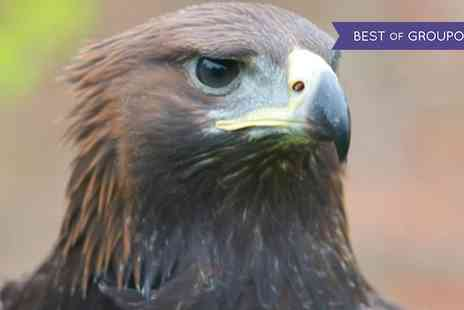 York Bird of Prey Centre - Halk Walk, Half Day or Full Day Falconry Experience for Up to Four - Save 50%