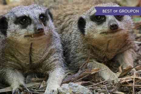 Eagle Heights - Meerkat Experience for Two or Four - Save 61%