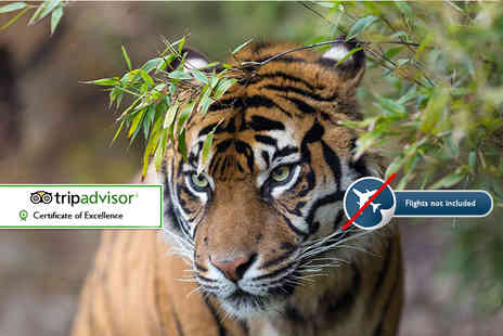 Expedition Jungle - Eight night Sumatran wild orangutan and tiger tour including accommodation, selected meals and tour guide - Save 53%