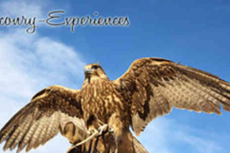 Falconry Days - 4 Hour Falconry Experience - Save 61%