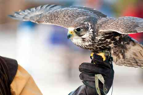 Falconry Southeast- Two Hour Hawk Walk Experience for One, Two or Four - Save 42%