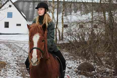 Bewerley Riding Centre - One Hour Horse Riding Lesson, Trek or Hack for Up to Four - Save 58%
