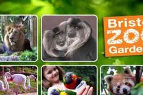 Bristol Zoo - Two adult tickets to the Sunset Special - Save 53%