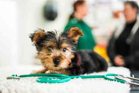 Wellpets Animal Care - Cat or Dog Castration or Spay - Save 50%