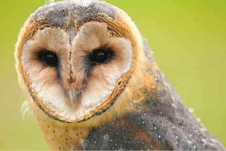 North Somerset Bird of Prey Centre - Two hour owl experience for one or Annual bird adoption - Save 57%