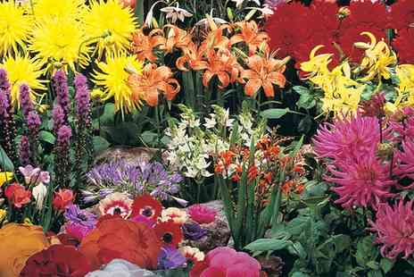 Van Meuwen - Summer Colour Bulb Collection With Free Delivery - Save 65%