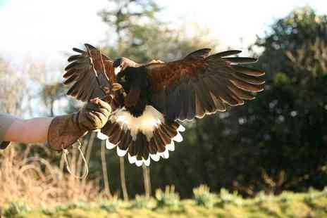 Raptor World - Two hour bird of prey experience - Save 62%