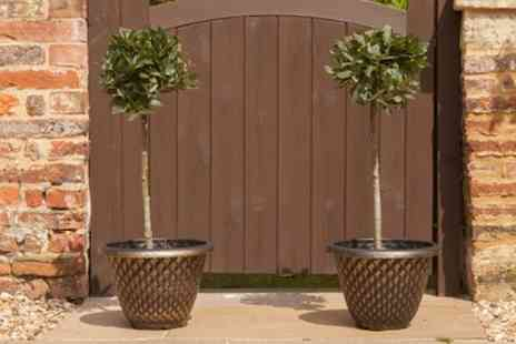 You Garden - Pair Of Patio Bay Trees with Optional Pots With Free Delivery - Save 25%