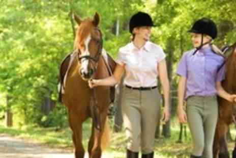 Ellenwhorne Equestrian Centre - Half Day Equestrian Experience Including Lunch - Save 60%