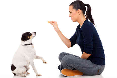 Holly and Hugo - Dog Behaviour and Training Online Course - Save 89%