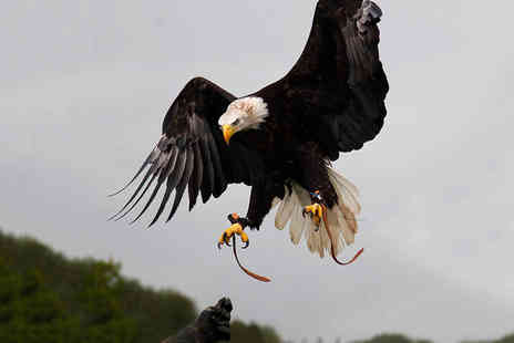 Xtreme Falconry - Two hour hawking experience for one - Save 71%