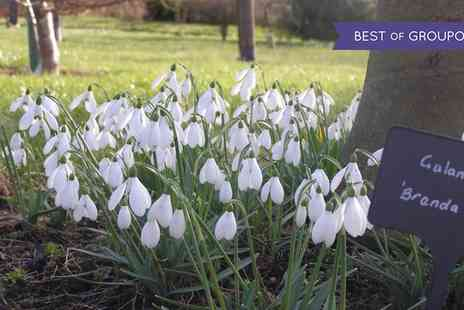 Snowdrop Special Event - Two adults to Birkheads Snowdrop Special Event on 25 February To 5 March - Save 55%