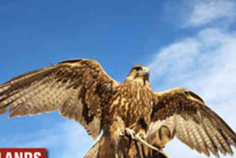 Wetlands Animal Park - Day long Falconer experience - Save 68%
