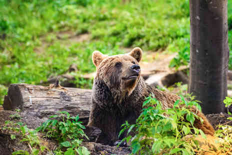 ClearSky Holidays - Three night break in Romania with a bear experience, flights, cable car & wine tasting - Save 0%