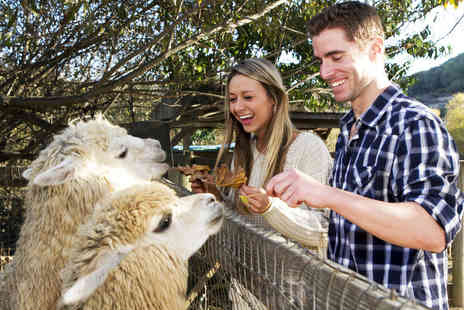 The Llama Park - Entry to The Llama Park for one adult and one child - Save 45%
