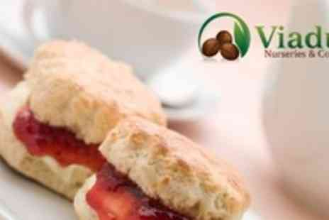 Viaduct Nurseries and Coffee Shop - Afternoon Tea For Four - Save 57%