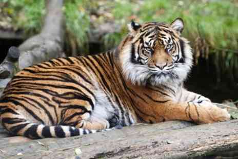 Dudley Zoological Gardens - Child, Adult or Family Ticket, Entry 1st March To 31st March - Save 50%
