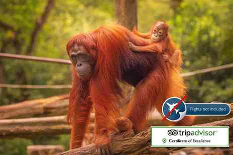 Expedition Jungle - Eight night Sumatran wild orangutan and tiger tour including accommodation - Save 47%