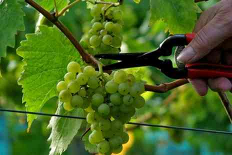 Lily Farm Vineyard - Vineyard Tour and Wine Tasting for Two or Four - Save 38%