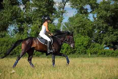 Stanmore Stables - 30 or 60 minute horse riding lesson for one or two - Save 50%