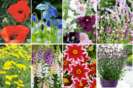 Dobies of Devon - Lucky dip of six spring flowering perennials - Save 67%