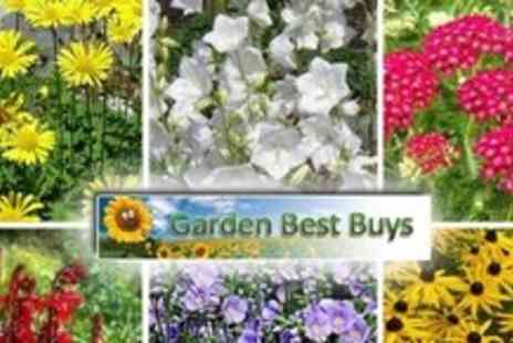 Garden Best Buys - Two Ready to Plant Sets of Six - Save 58%