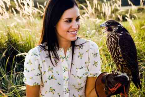 Wings of Wales - Three Hour Falconry Experience with Lunch - Save 40%