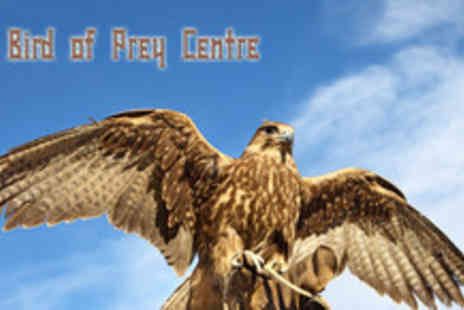 The Bird of Prey Centre - Half day bird of prey and falconry experience - Save 60%