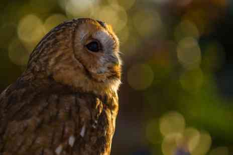 Baytree Owl Centre - Entry or Season Ticket for One, Two or a Family of Up to Five - Save 50%