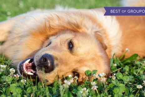 Aztec Events - Entry For Two or four tickets to All About Dogs - Save 52%