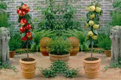 Groupon Goods Global GmbH - Small Patio Pot and Saucer Set, Citrus Collections or Mini Patio Fruit Trees Orchard - Save 55%