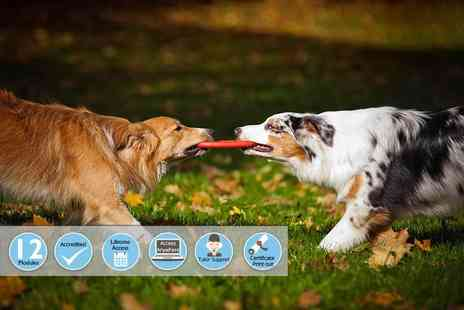 Centre of Excellence - Online canine behaviour training diploma course - Save 81%