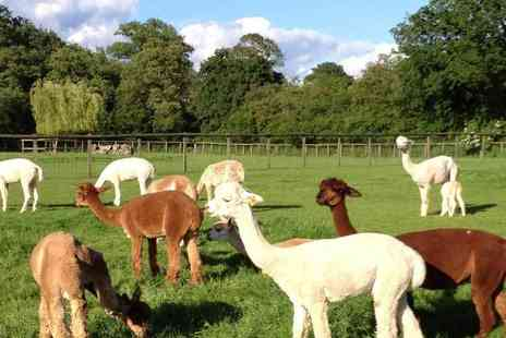 Pennybridge Alpacas - Two hour alpaca experience for two - Save 50%