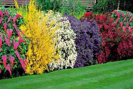 Direct Plants - Five piece colourful mixed garden shrub collection - Save 57%