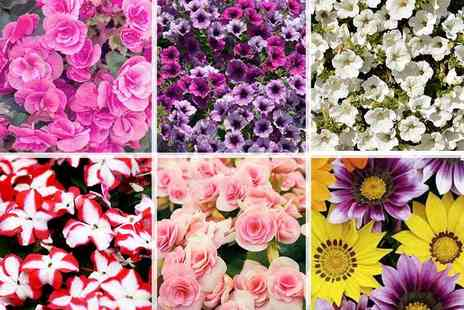 Gardening Direct - 70 lucky dip bedding plants - Save 72%