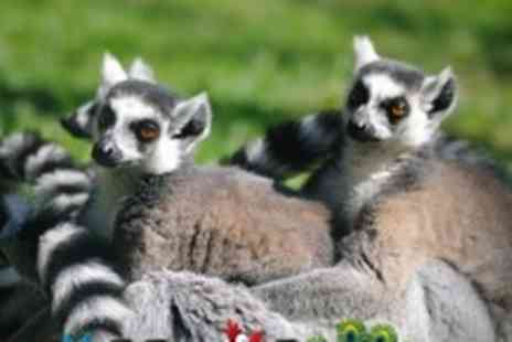 Blackbrook Zoological Park - Admission For Two Adult - Save 56%