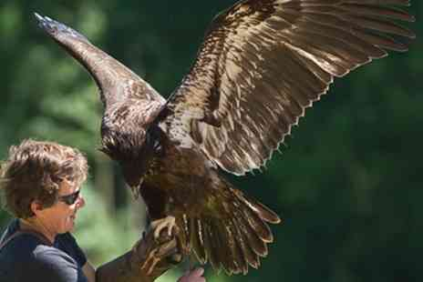 The International Centre for Birds of Prey - Entry with a Hot Drink for One Child or Adult - Save 36%