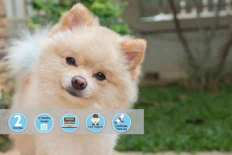 Vizual Coaching - Online dog grooming and pet first aid courses - Save 94%