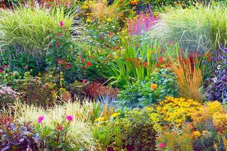 Groupon Goods Global GmbH - 5 To 15 Plants XL Perennial Border Collection - Save 78%