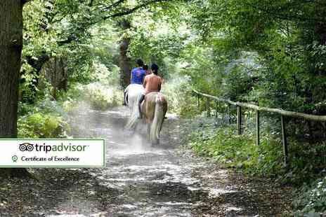 Trent Park Equestrian Centre - Three hour horse riding experience suitable for beginners or advanced riders with tea and cake - Save 61%
