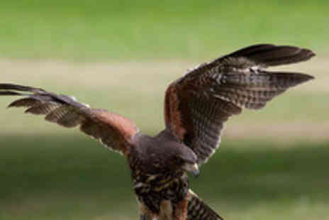 The Birds of Prey Centre - Three hour hawk & eagle experience inc. flying the hawks & eagles - Save 77%