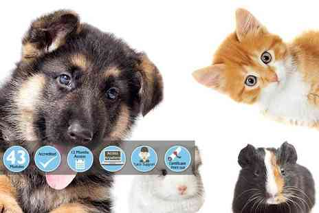 Holly & Hugo - Online animal care business course - Save 93%