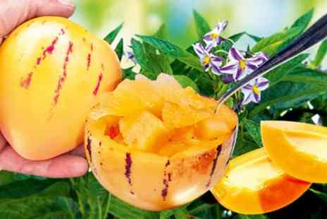 Groupon Goods Global GmbH - Melon Pear Sugar Gold Six or Nine Plants - Save 0%