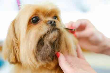 The Grooming Lodge - Grooming Service for Small, Medium and Large Dogs - Save 0%