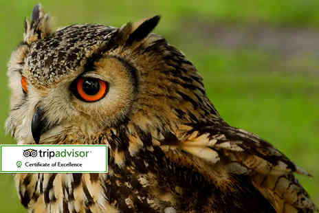 Falconry Experiences - Three hour falconry and owl handling experience for one or two - Save 62%