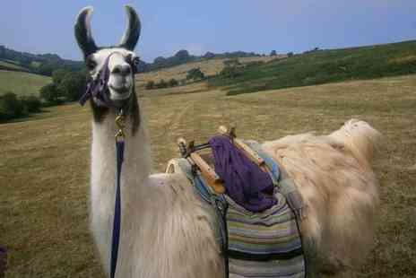 Buyagift - llama trekking experience with cream tea - Save 0%
